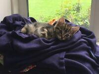 Super Lovely Kitten