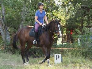 Sweet mare for sale Samford Valley Brisbane North West Preview