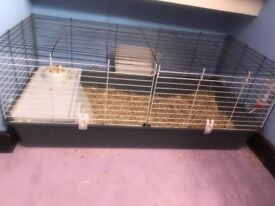 Two Guinea pigs for sale. Come with cage and 2 large pack of hay