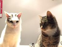 1 beautiful male white cat and 1 female tabby cat ages 5-6 years.
