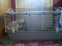 Lionhead rabbit and cage for sale.