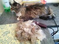 Country Charm (southwest cat grooming) mobile Cat Groomer covering parts of Devon