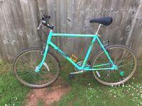 Raleigh lizard bike