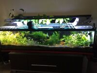 4 Feet Fish tank fully loaded with Plants, LED Lights and fishes only £150***