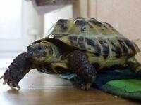 Lost tortoise - large reward