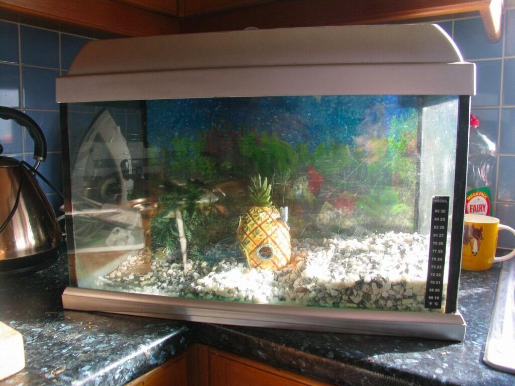 Fish for first tank - 50cm X 25cm Fish Tank Aquarium Ideal First Tank