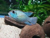 Fish x 6