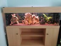 Large fish tank / aquarium