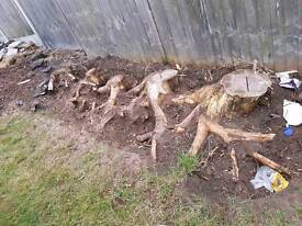 tree stump removal wanted