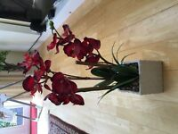 Artifical Red Plant