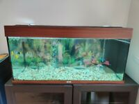 Juwel Aquarium Rio 180 fish tank with all assessories and tropical fishes for sale