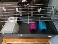 Guinea pig / Rabbit cage extra large