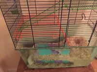 2 Gerbils with a cage and accessories