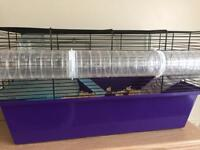 FREE 11 month old dwarf hamsters