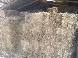 Grass hay small squares Birregurra Colac-Otway Area Preview