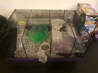 Hamster with cage complete £30