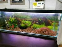 2 x Tropical fish tank with fish, shrimps and more