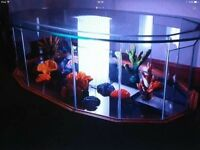 Fish tank coffee table perfect with light + pump