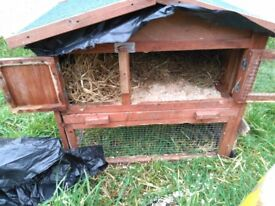 6 month old Rabbit and Hutch