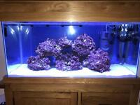 Aqua oak 200l fish tank ready for marine !