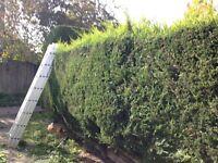 Aaron garden maintenance & landscaping