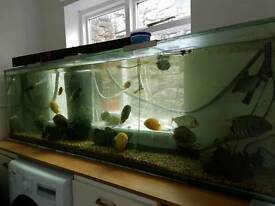 6 ft tank including fish