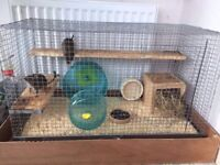 2 cute degus for sale with cage and toys