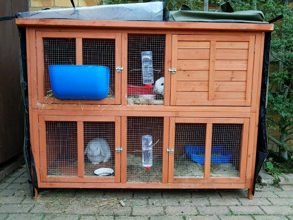 Pets At Home Blue Bell Rabbit Hutch With 2 Mini Lop Rabbits And All Accessories