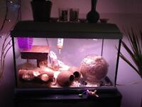 All tank with 2 female Gerbils