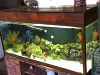 My fish tank