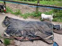 VARIOUS HORSE RUGS FOR SALE