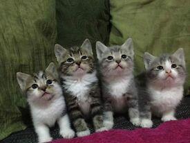7 Beautiful kittens