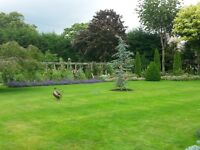 Emerald Garden services. All types of garden maintenance from tree felling to Garden fences
