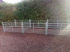 Galvanized sheep hurdles 4ft 5 ft 6 ft delivered £25