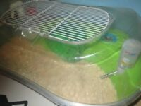 Hamster for sale with cage £15