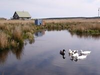 straw bale eco house with land, Caithness