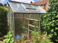 Greenhouse with shelves for sale - £50 buyer to dismantle