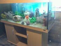 4 FT JEWEL RIO 240 LITRE FISHTANK WITH BEECHWOOD CABINET + EXTERNAL FILTE