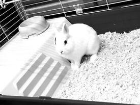 White dwarf rabbit