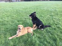 Pet Sitting & Dog Walking - Hounslow, Isleworth, Osterly, Twickenham, Teddington