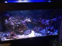 Marine Fishtank