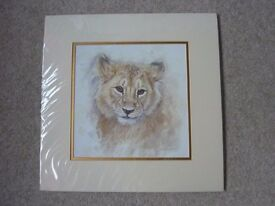 LION CUB MOUNTED SIGNED PRINT BY LYNDSEY SELLEY