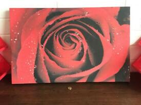 Lovely Red Rose Canvas