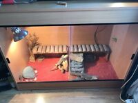 Bearded dragons and tank set up 4ft long, 2ft wide & 3ft tall pine tank