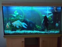 4ft fish tank and cabinet and full setup with large fish