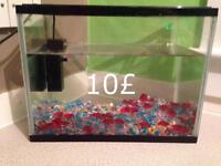 Tank fish