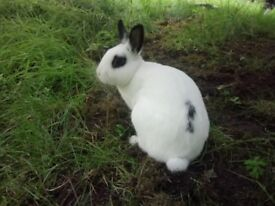 Cute , lovely , white bunny with black circle around eyes.