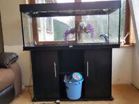 Juwel fish tank and stand