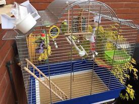 2 budgies birds plus cage etc