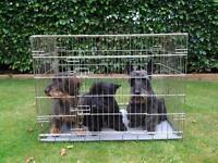 Large Dog Cage with Metal Tray